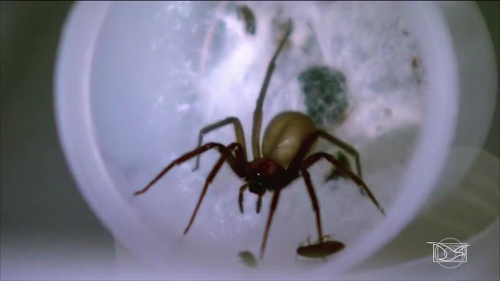 (PDF) Incidência de aranhas de importância em saúde ...